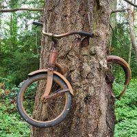 1914. godine momak je naslonio bicikl na drvo i odtišao u rat… Priča o čuvenom biciklu uraslom u stablo